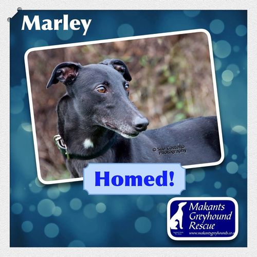 Marley-homed