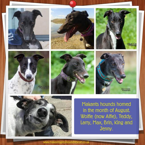 Hounds homed aug 16 amended