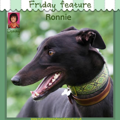 Ronnie friday feature sept 16