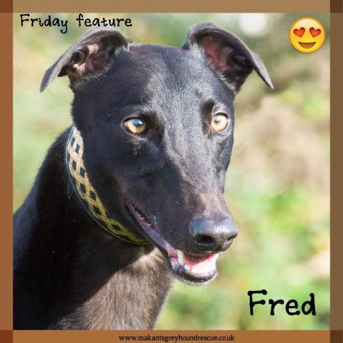 Friady Feature Fred 25.11.16