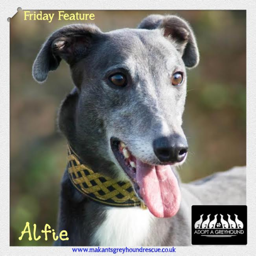 Alfie Friday feature