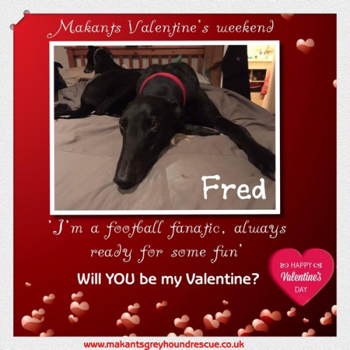 Thumbnail_Fred valentines