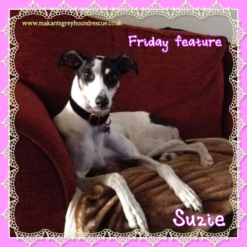 Suzie friday feature 13.7.17