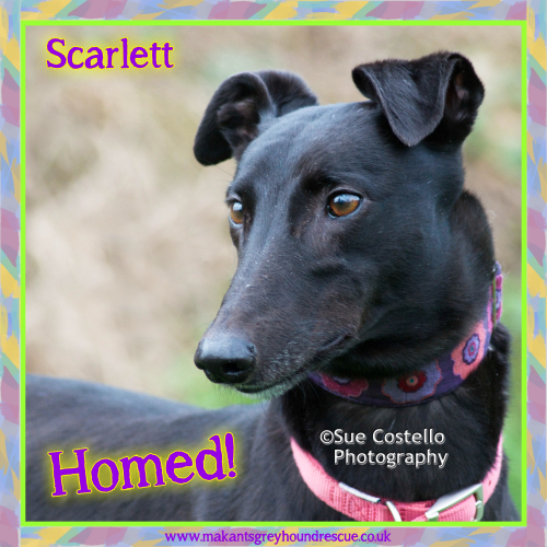 Scarlett homed 6.12.17