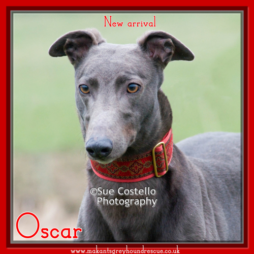 Oscar new arrival for fb 11.2.18