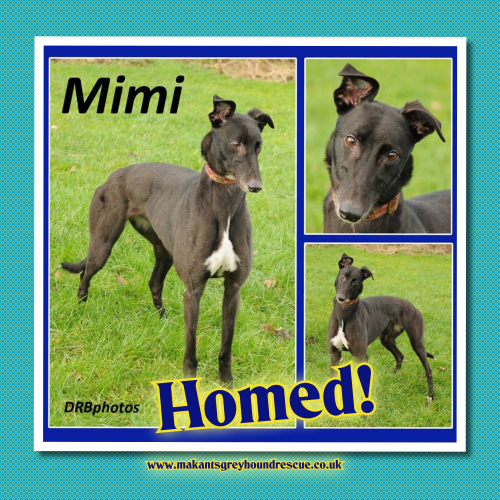 Mimi now Mabel homed 28.3.18