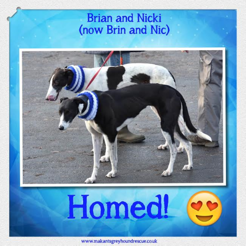 Brian and Nicki homed now Brin and Nic Nov 16