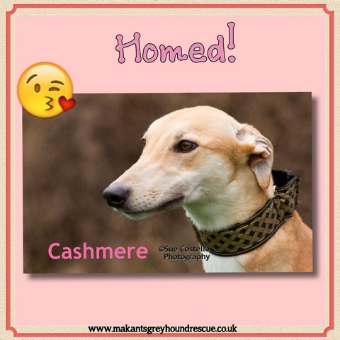 Thumbnail_Cash homed March 17