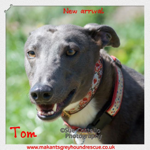New arrival Tom May 17