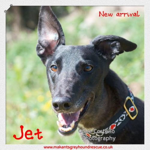 New arrival Jet