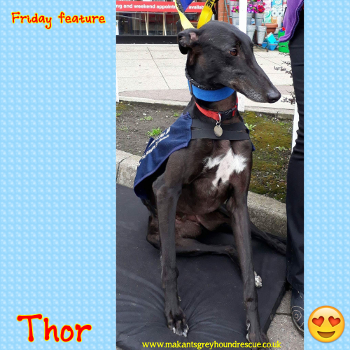 Thor friday feature 28.7.17