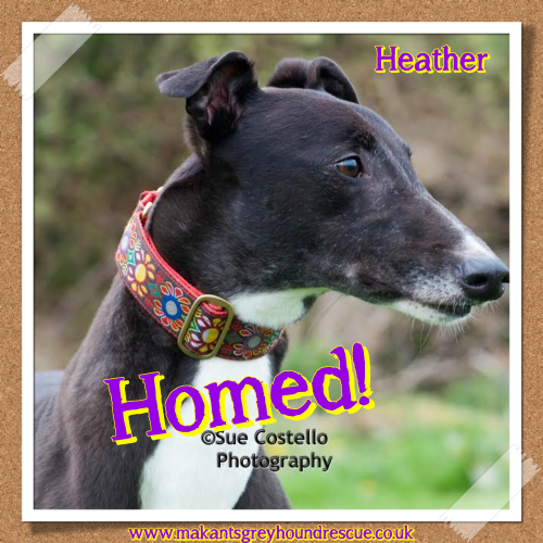 Heather homed 17.9.17