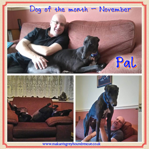Dog of the month Nov 17