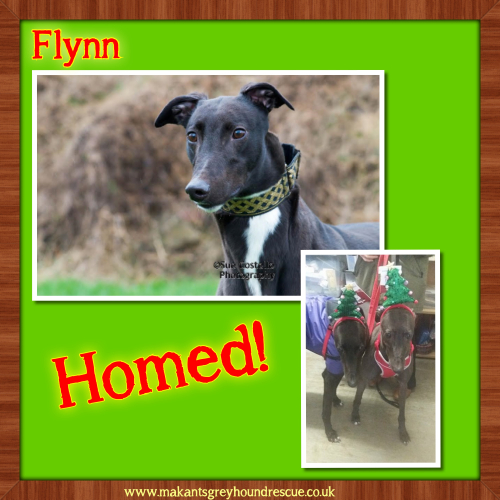 Flynn and Bella for fb homed 6.12.17