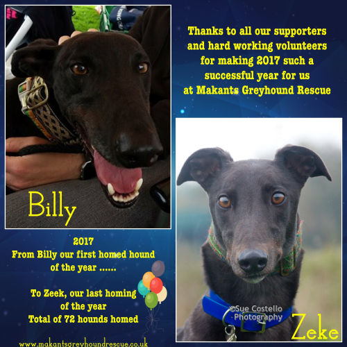 End of year 72 hounds homed fb