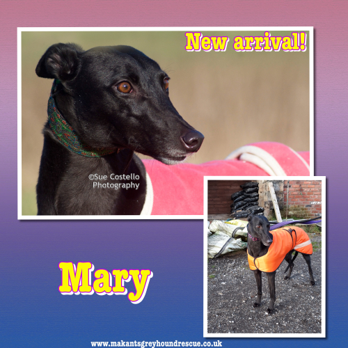 Mary new arrival for fb jan 2018