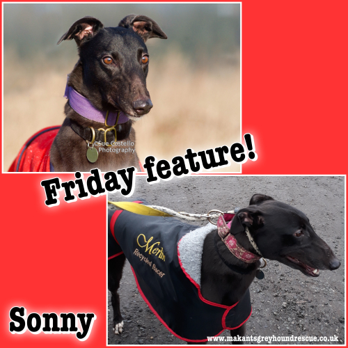 Sonny friday feature 26.1.18