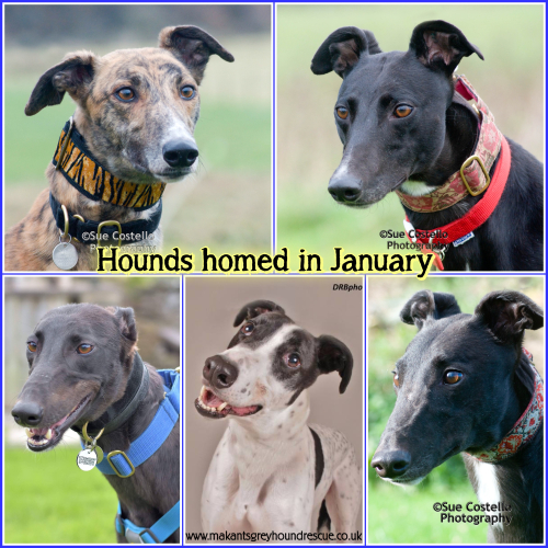 Hounds homed in January 2018