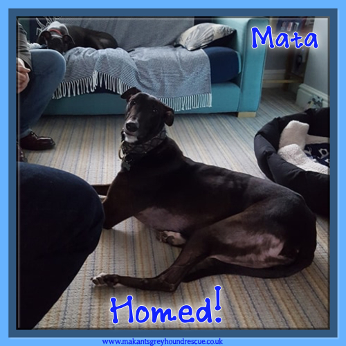 Mata homed 12.2.18 credit Joanne Whalley