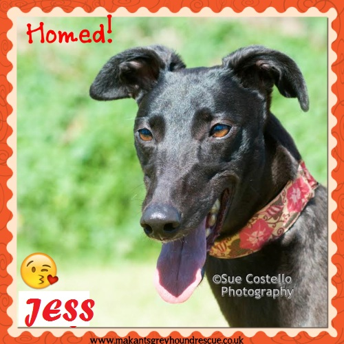 Jess was Tiny adopted Aug 2017 Sue Roberts