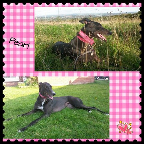 Rehomed-pearl