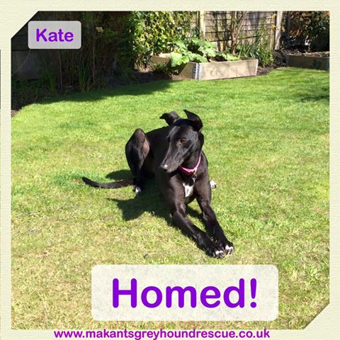 Kate-homed