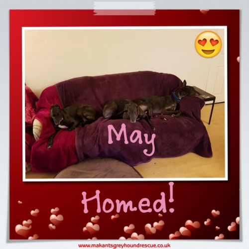 Thumbnail_May homed with Rio and Flute Feb 2017 Mary and Stewart