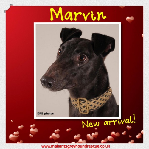 Thumbnail_Marvin new arrival