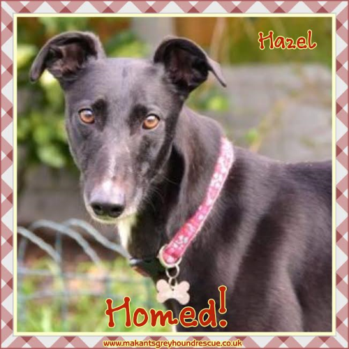 Hazel homed 21.5.17