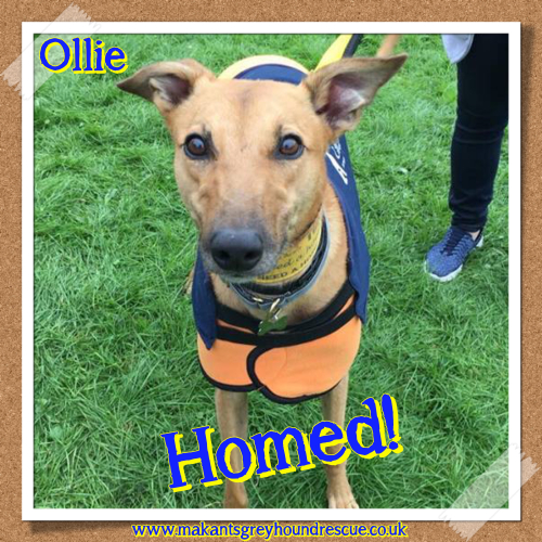 Ollie homed 17.9.17