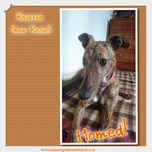Rosetta now Rosie Homed 19.2.18