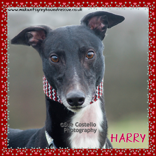 Harry dog of the month May 2018