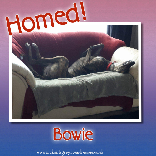 Bowie homed 23.4.18