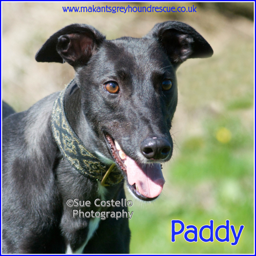 PADDY FOR FACEBOOK