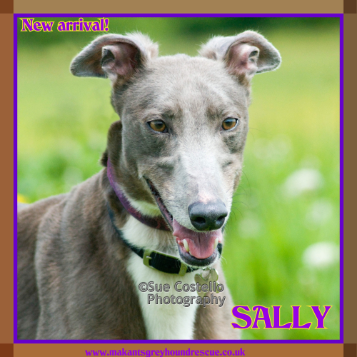 Sally new arrival 17.5.18