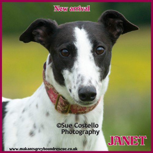 NEW ARRIVAL MAY 2018 JANET