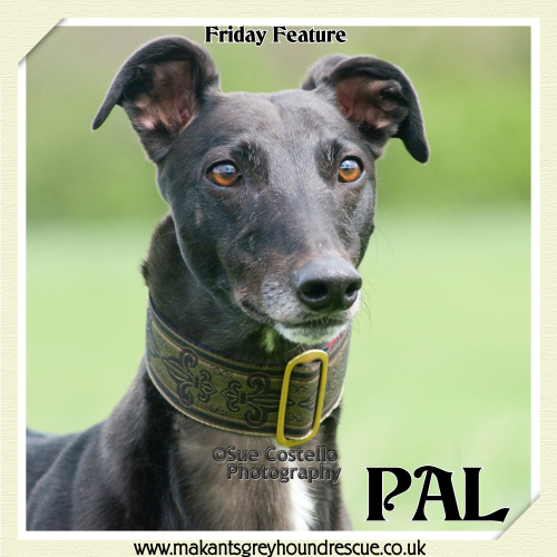Pal fri feature 15.6.18