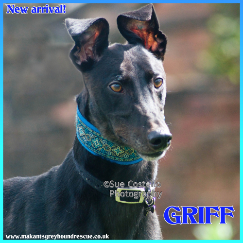 New arrival pic of Griff 11.8.18