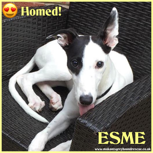Esme homed 20.8.18