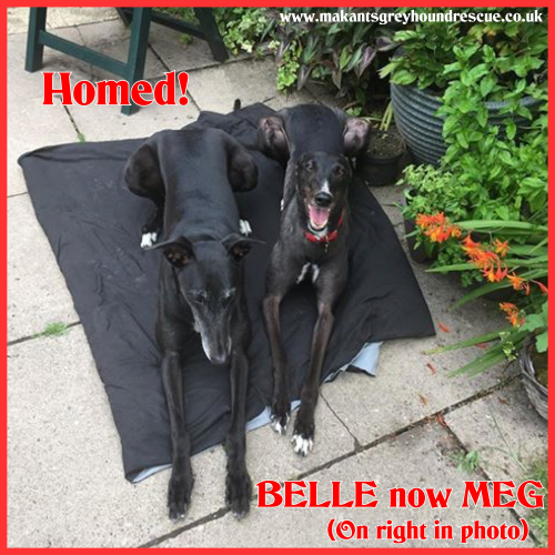 BELLE HOMED  NOW MEG 22.8.18