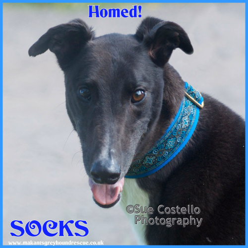 Socks homed 7.10.18