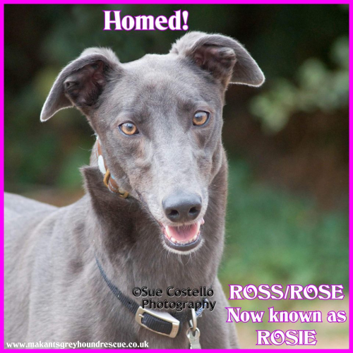 Rose now Rosie homed 18.10.18 (1)