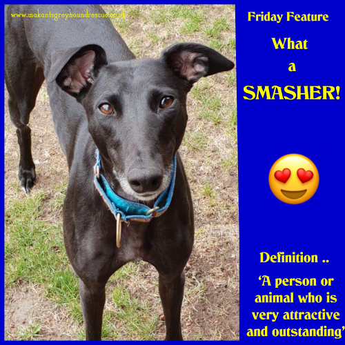 Smasher friday feature in foster 18.7.18