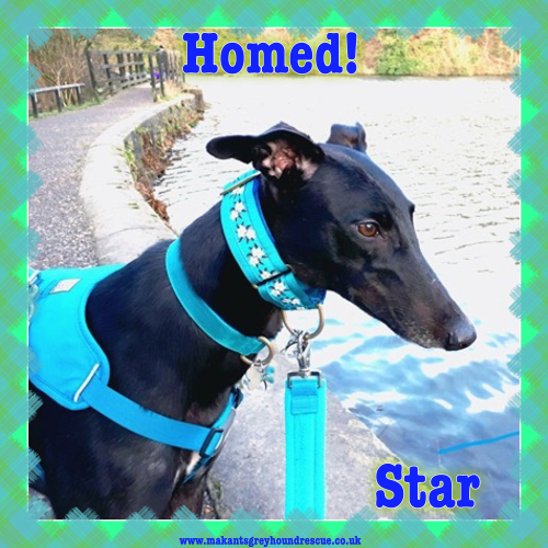 Star homed 1.1.18