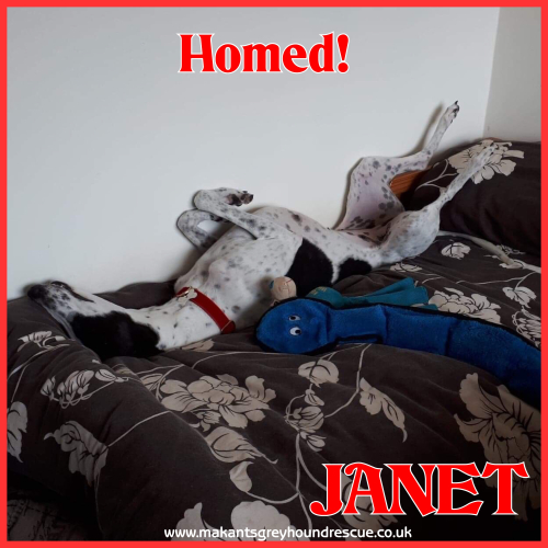 Janet homed 288.18 (1)