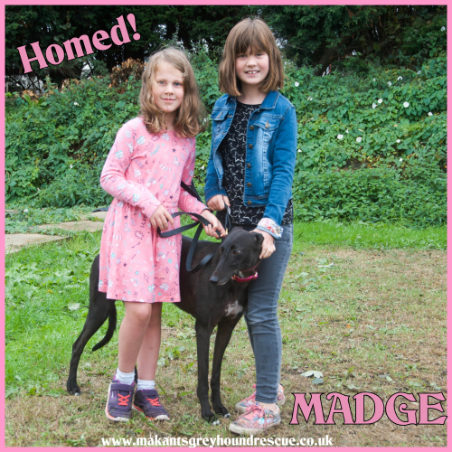 Madge homed for fb 26.9.18