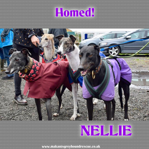 Nellie homed for fb (on right) 26.9.18