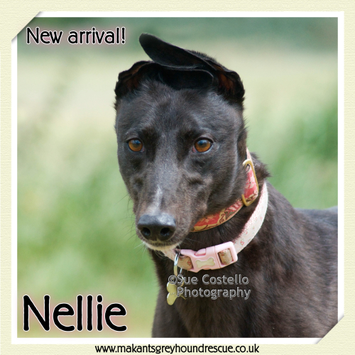 Nellie new arrival 18.6.18