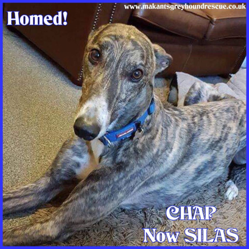 Chap now Silas homed 16.10.18