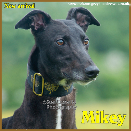 Mikey new arrival end May 2018